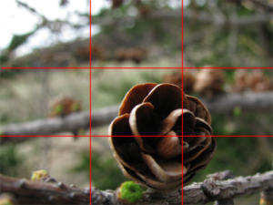 The rule of thirds helps your subject catch the eye